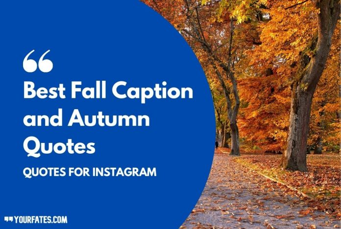 Best Fall Caption and Autumn Quotes