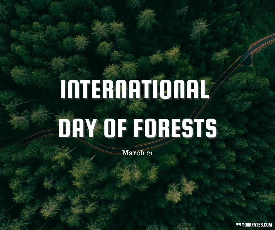 International Day of Forests wished (1)
