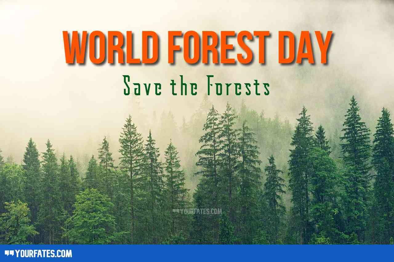 world forest day wishes