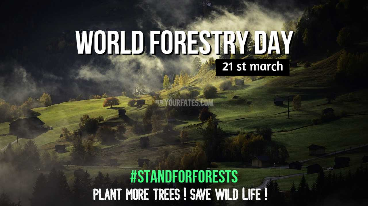 world forest day