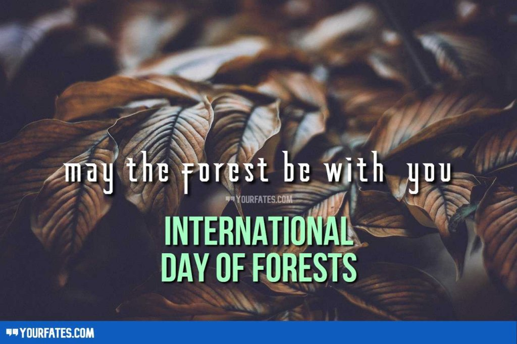 forest day wishes