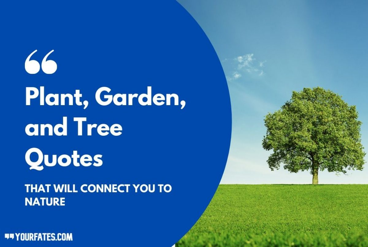 Plant Gardening And Tree Quotes That Will Inspire You