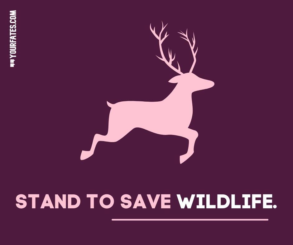 World Wildlife Day slogans